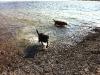 Island Dogs